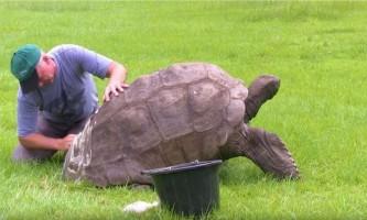 На острові святої олени вперше викупали 184-річну черепаху