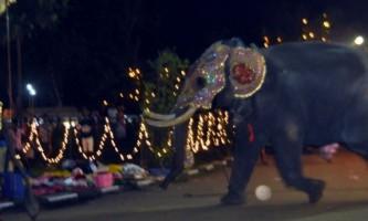 На шрі-ланці слон напав на людей
