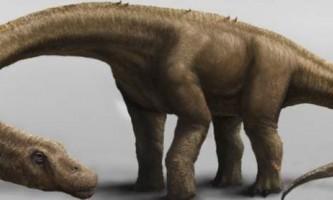 На території аргентини знайшли новий вид динозаврів