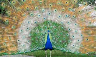 Національні птиці різних країн: фото і опис