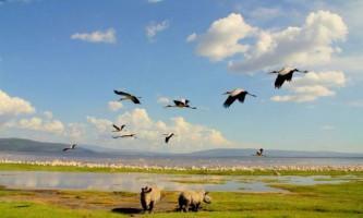 Національний парк озеро накуру - жива картина