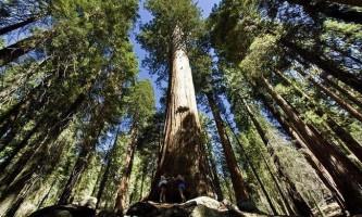 Національний парк секвойя - чудо каліфорнійської природи