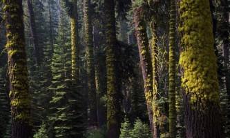Національний парк секвойя