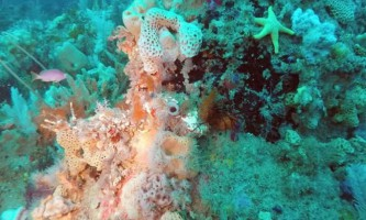Знайдений конкурент великого бар`єрного рифу