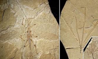 Знайдений палочник епохи динозаврів