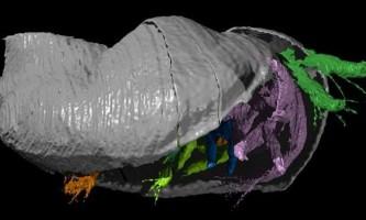 Знайдений рідкісний зразок ракоподібних силурійського періоду