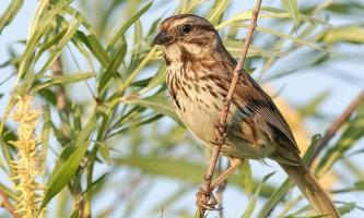 Знайдена причина, яка робить міських птахів агресивними