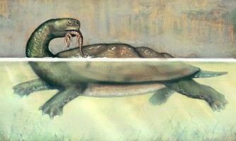Знайдено останки гігантської прісноводної черепахи