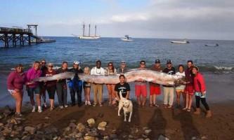 Знайдено останки міфічного морського змія