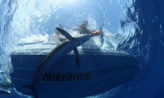Напад акули на марліну стало несподіванкою для фотографа