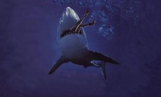Напади акул на людей
