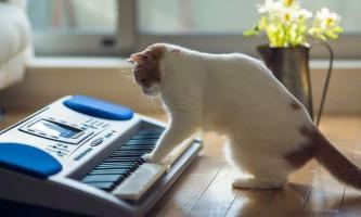 Написана унікальна музика, здатна зробити кішок ласкавими
