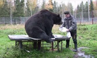 Намальовані ведмедем картини продаються по 300 євро за штуку