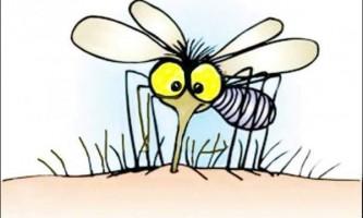 Народні засоби лікування укусів комах