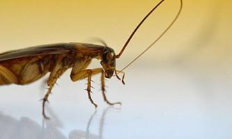 Комахи вмиваються, щоб краще відчувати запахи