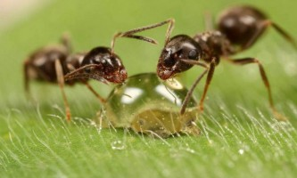 Комахою допоможуть знизити агресивність