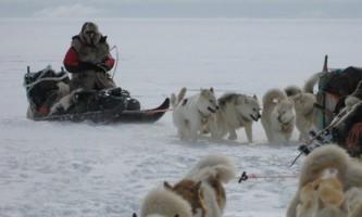 Настирливий білий ведмідь переслідує експедицію конюхова