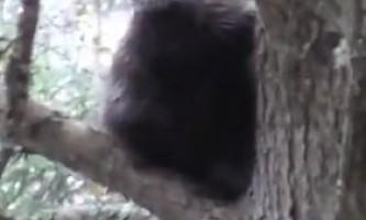 Невідомий примат виявлений в лісі штату мен