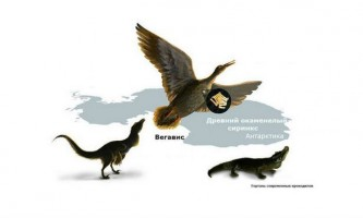 Деякі доісторичні птахи видавали звуки, схожі на крякання качок