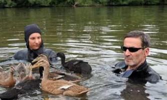 Німецькі бізнесмени пропливуть 500 кілометрів на компанії семи качок