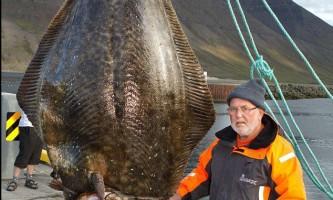 Німецький пенсіонер зловив палтуса-рекордсмена