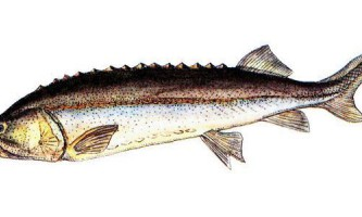 Незвичайні рекорди відомих риб
