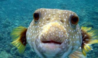 Кілька фактів про інтелект риб