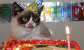 Незважаючи на день народження, grumpy cat як і раніше не в захваті