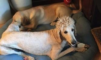 Невдала стрижка прославила собаку на весь інтернет