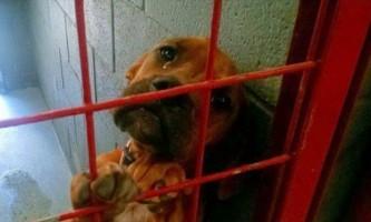 Неймовірно емоційний фото з собачого притулку