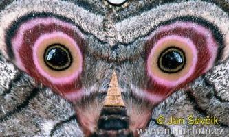 Неймовірні портрети на крилах метеликів