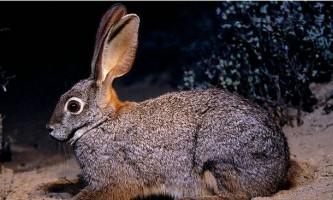 Окуносіма - острів кроликів в японії