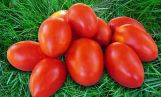 Низькорослі сорти томатів