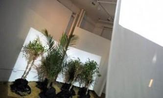 Нью-йоркський художник створив фільм для рослин
