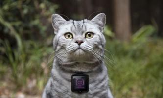 Носиться камера whiskas дозволяє кішкам розміщувати свої фото в instagram