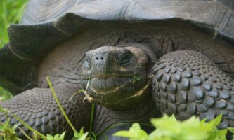 Новий вид гігантських черепах виявлено на галапагосских островах