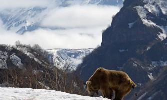 Про ведмедів, як про чортів, можна розповідати нескінченно і цікаво ...