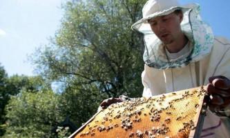 Про пасіці, бджолах і меді (частина 2)