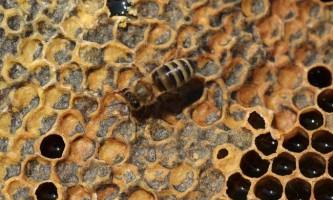 Про пасіці, бджолах і меді (частина 3)