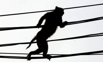 Мавпа знеструмила кенії на три години