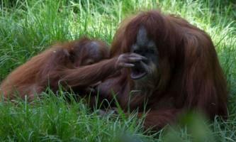 Мавпи можуть передбачати людські помилки