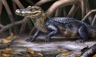 Виявлено найбільш ранній предок кайманів