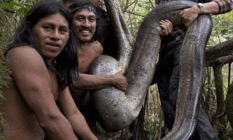 Виявлена найдовша змія в світі