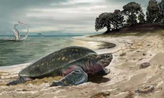Виявлена найдавніша морська черепаха планети, вона мала двометрову довжину