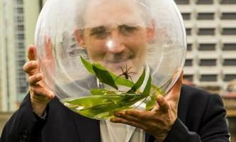 Виявлений в австралії павук плаває і полює на рибу