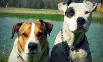 Виявлено, що пси і суки розуміють по-різному