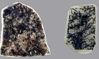 Виявлено мікроорганізми, незаймані еволюцією