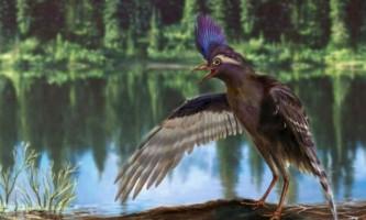 Виявлено останки найдавнішого предка сучасних птахів