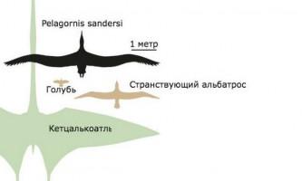 Виявлено останки найбільшої літаючої птиці