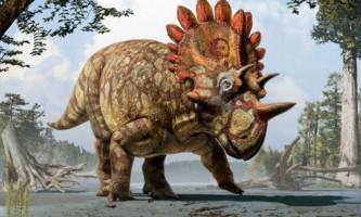 Виявлено останки дивного рогатої родича трицератопса